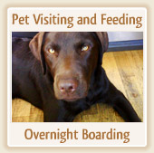 Pet Visiting and Feeding - Overnight Boarding