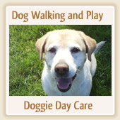 Dog Walking and Play - Doggie Day Care